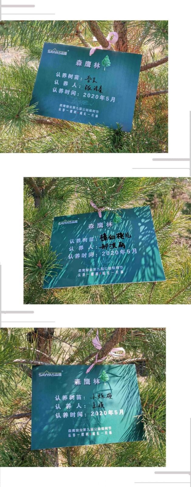 从扩大的森鹰林到消失的毛乌素,你认领的树苗再填新绿!